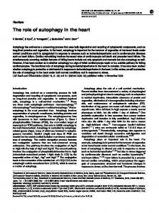 The role of autophagy in the heart - Nature