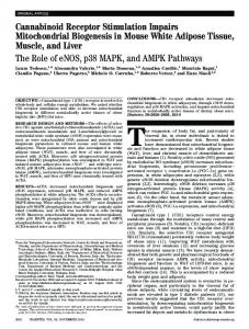 The Role of eNOS, p38 MAPK, and AMPK Pathways - Diabetes