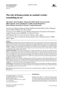 The role of homocysteine in seminal vesicles