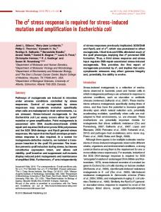 The sE stress response is required for stress-induced ... - CiteSeerX