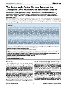The Serotonergic Central Nervous System of the ... - OPUS Würzburg