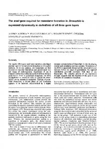 The snail gene required for mesoderm formation in ...