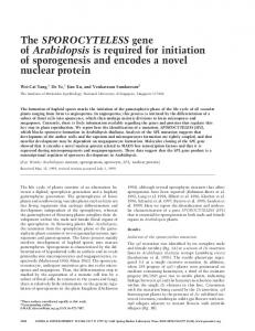 The SPOROCYTELESS gene of Arabidopsis is required for initiation of ...