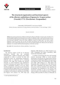 The structural organization and functional aspects of the ... - DergiPark