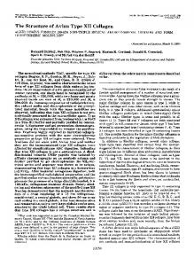 The Structure of Avian Type XI1 Collagen - The Journal of Biological ...