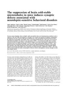 The suppression of brain cold-stable microtubules in mice induces ...