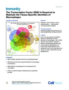 The Transcription Factor ZEB2 Is Required to