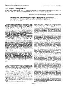 The Type X Collagen Gene - The Journal of Biological Chemistry