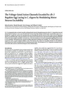 The Voltage-Gated Anion Channels Encoded byclh-3 Regulate Egg ...