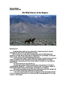 The Wild Horses of the Mojave - Wild Journalism