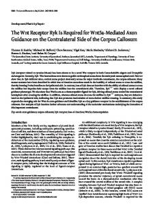 The Wnt Receptor Ryk Is Required for Wnt5a ... - Semantic Scholar