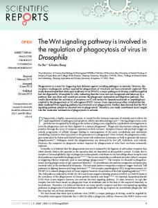 The Wnt signaling pathway is involved in the ... - ScienceOpen