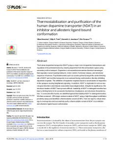 Thermostabilization and purification of the human dopamine transporter