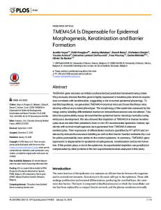 TMEM45A Is Dispensable for Epidermal