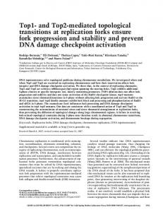 Top1- and Top2-mediated topological transitions at replication forks ...