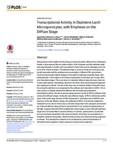 Transcriptional Activity in Diplotene Larch