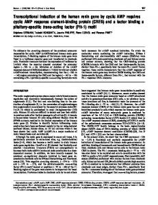 Transcriptional induction of the human renin gene by cyclic AMP ...