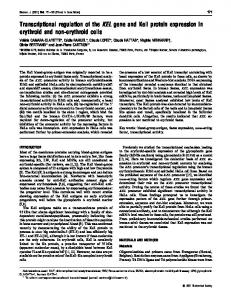 Transcriptional regulation of the KEL gene and Kell protein expression ...