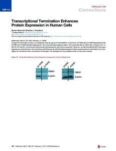Transcriptional Termination Enhances Protein Expression in Human