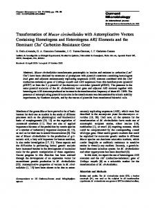 Transformation of Mucor circinelloides with Autoreplicative Vectors ...