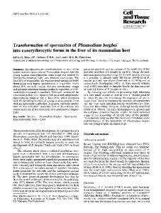 Transformation of sporozoites of Plasmodium berghei into ...