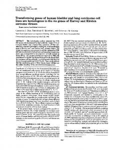 Transforming genes of human bladder and lung carcinoma cell lines ...