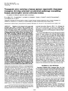 Transgenic mice carrying a human mutant superoxide ... - Europe PMC