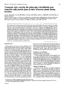 Transgenic mice carrying the guinea-pig a-lactalbumin ... - Europe PMC