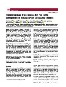 Transglutaminase type 2 plays a key role in the ... - Wiley Online Library
