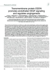 Transmembrane protein ESDN promotes endothelial VEGF signaling ...