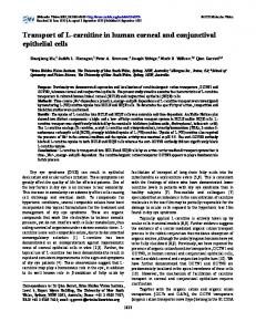 Transport of L-carnitine in human corneal and ... - Molecular Vision