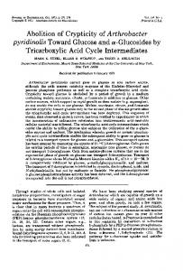 Tricarboxylic Acid Cycle Intermediates - Journal of Bacteriology
