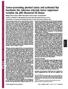 Tumor-promoting phorbol esters and activated Ras inactivate the ...