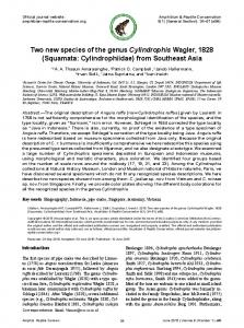 Two new species of the genus Cylindrophis Wagler, 1828 (Squamata ...