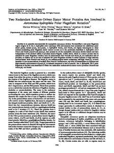 Two Redundant Sodium-Driven Stator Motor Proteins Are Involved in ...
