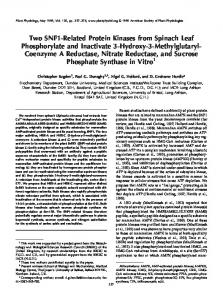 Two SNF1-Related Protein Kinases from Spinach Leaf ... - UFV