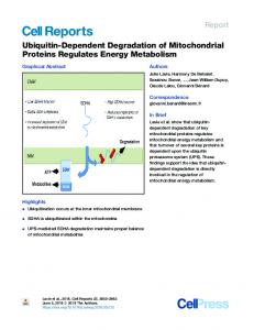 Ubiquitin-Dependent Degradation of Mitochondrial ... - Cell Press