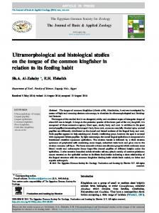 Ultramorphological and histological studies on the