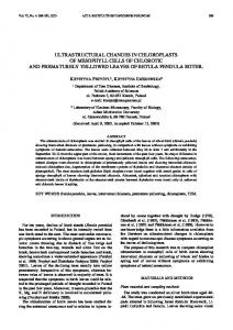 ultrastructural changes in chloroplasts of mesophyll cells of chlorotic ...
