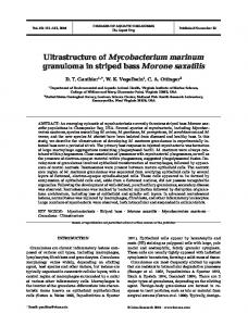 Ultrastructure of Mycobacterium marinum granuloma in striped bass ...