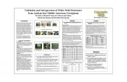 Validation and Introgression of White Mold Resistance ... - USDA ARS
