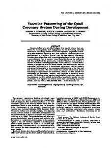 Vascular patterning of the quail coronary system ... - Wiley Online Library
