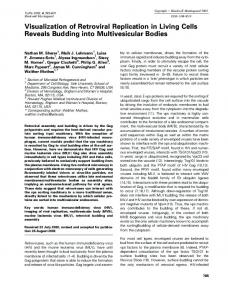 Visualization of Retroviral Replication in Living ... - Wiley Online Library