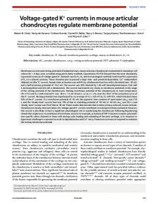 Voltage-gated K+ currents in mouse articular chondrocytes regulate ...