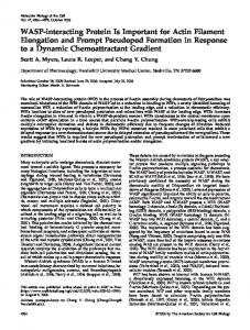 WASP-interacting Protein Is Important for Actin ... - Semantic Scholar