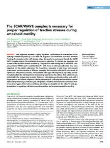 WAVE complex is necessary for proper ... - BioMedSearch