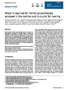 Wbp2 is required for normal glutamatergic synapses in the cochlea ...