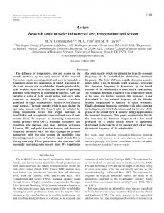 Weakfish sonic muscle - Journal of Experimental Biology - The ...