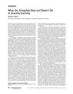 What the Amygdala Does and Doesn't Do in Aversive Learning