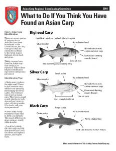What to Do If You Think You Have Found an Asian Carp